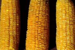 Graan van de laatste oogst royalty-vrije stock afbeelding