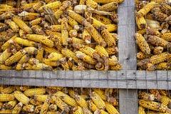 Graan-voederbak stock foto