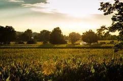 Graangebied bij dageraad Stock Foto's