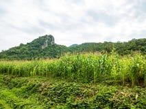 Graangebied, Chiang Mai royalty-vrije stock afbeelding