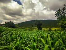 Graangebied in Guerrero, Mexico Landelijk landschap royalty-vrije stock afbeelding