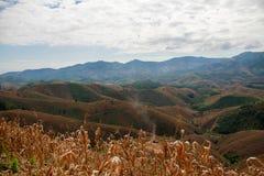 Graangebied op de heuvel Royalty-vrije Stock Afbeeldingen