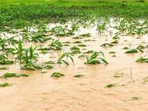 graaninstallaties op een gebied overstroomde schade stock afbeelding
