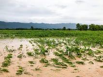 graaninstallaties op een gebied overstroomde schade stock foto's