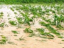 graaninstallaties op een gebied overstroomde schade stock afbeeldingen