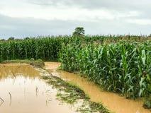 graaninstallaties op een gebied overstroomde schade stock foto