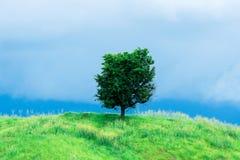 Graanlandbouwbedrijf op heuvel met blauwe hemel en zonsondergangachtergrond Stock Foto's