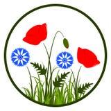 Graanpapavers en korenbloemen Stock Foto's