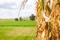 Graansteel op een Landbouwbedrijf Stock Foto's