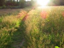 Graanveld, Springendal, Twente; Wheat field Springendal, Twente,. Netherlands royalty free stock image
