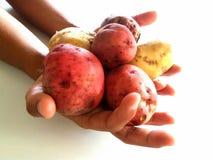 Grab potatoes Stock Images