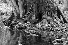 Tronco de árbol poderoso fotografía de archivo