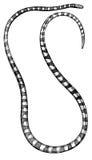 Grabado antiguo de la serpiente de mar aislado contra blanco Fotos de archivo libres de regalías