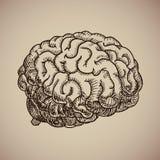 Grabado del cerebro Cuerpo humano ejemplo en estilo del bosquejo Fotografía de archivo