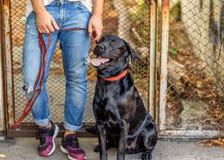 Grabb som kramar med hans hund labrador som spelar i parkera royaltyfri bild