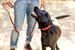 Grabb som kramar med hans hund labrador som spelar i parkera fotografering för bildbyråer
