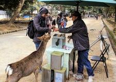 Grabben köper mat för hjortar i parkera Fotografering för Bildbyråer