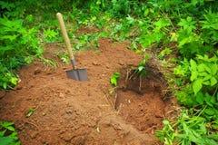 Graben Sie ein Loch im Boden stockbild