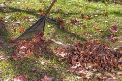 Grabić w górę jesień liści zamknięty up Zdjęcie Stock