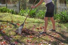 Grabienie jesieni liście w ogródzie Robić Ogrodowemu utrzymaniu Zdjęcia Royalty Free