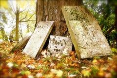 Grabsteine, die an einem Baum im Herbst sich lehnen stockbilder