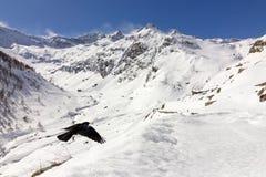 Gracchio alpino (graculus di Pyrrhocorax) che sorvola la valle Fotografia Stock Libera da Diritti