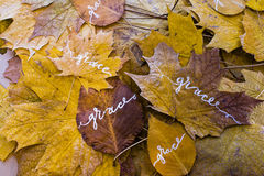 Grace in all that we get. Autumn leaves with the words grace, hand-made with white paint, leaves arranged on a plane royalty free stock image
