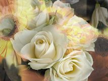 A grace notion. White rose, in abstract harmony with yellow sunflower Stock Images