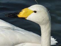 A graceful bird Royalty Free Stock Photos