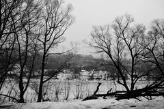 Graceful black silhouettes of trees on river bank. Monochrome photo stock image