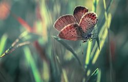 Graceful butterfly royalty free stock image