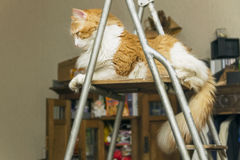 Graceful cat on ladder Stock Photo