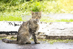 Graceful cat sitting on the asphalt Stock Photography