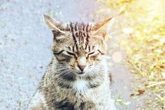 Graceful cat sitting on the asphalt Royalty Free Stock Photo