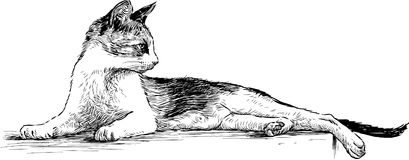Graceful cat. Vector drawing of a lying domestic cat Royalty Free Stock Image