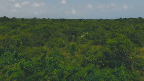 Graceful and delightful tropical forests. In the daytime stock video footage