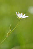 A graceful flower Stock Photography