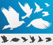 Graceful flying birds stock illustration