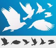 Graceful flying birds stock illustration