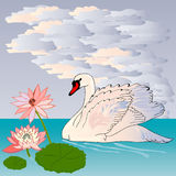 Graceful and graceful Swan Stock Photo