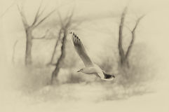 Graceful gull in winter fly Stock Images
