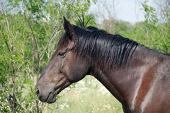 Graceful horse Royalty Free Stock Photography