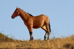 Graceful horse Royalty Free Stock Photo