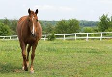 Graceful horse Stock Image