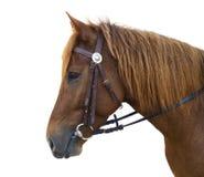 Graceful horse Royalty Free Stock Photos