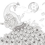 Graceful peacock coloring page Stock Photo