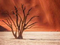 The graceful shape of a tree skeleton in Deadvlei, Namibia. royalty free stock photo