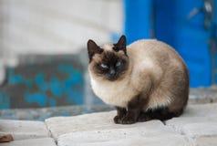 Graceful Siamese cat sitting on pile of bricks Stock Photography