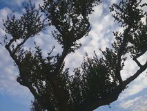 Graceful silhouettes of trees royalty free stock photography