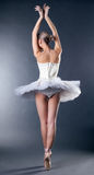 Graceful slim ballerina dancing back to camera. On gray background Stock Photography
